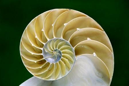 Foto: https://www.mismo.dk/blogs/stories/understanding-fractals